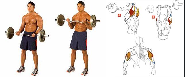 Гриф изогнутый W-образный упражнения