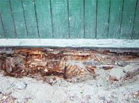 Домовый гриб