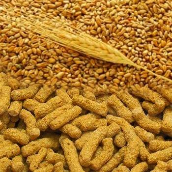 Кормовой экструдат из пшеницы.