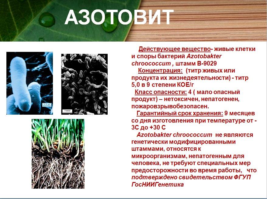 Азотовти