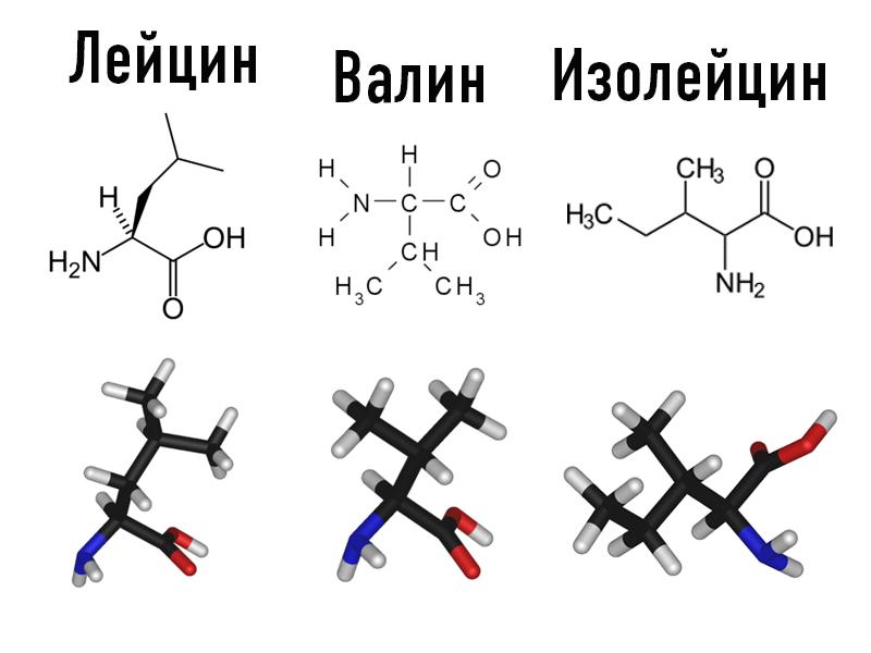 Лейцин, валин, изолейцин - незаменимые аминокислоты с разветвленной цепью
