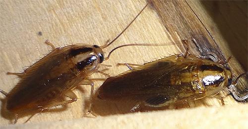 Наносить гель нужно в местах предполагаемого скопления насекомых