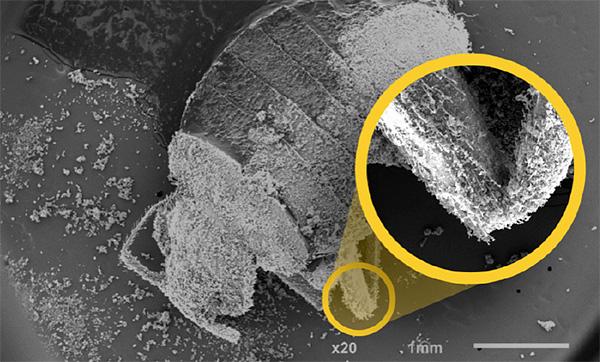 Препарат Гектор уничтожает клопов за счет из обезвоживания - частицы препарата буквально высасывают воду из организма паразита.