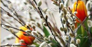 Вербное Воскресенье в 2015 году: приметы, традиции и обычаи для незамужних