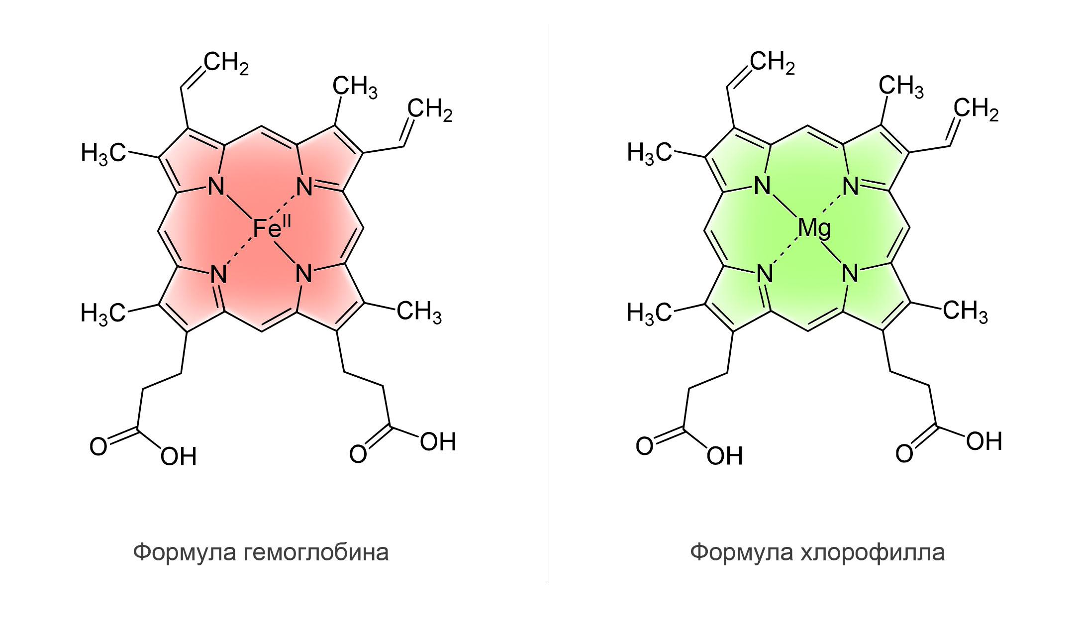 Молекула Хлорофилла и молекула гемоглобина