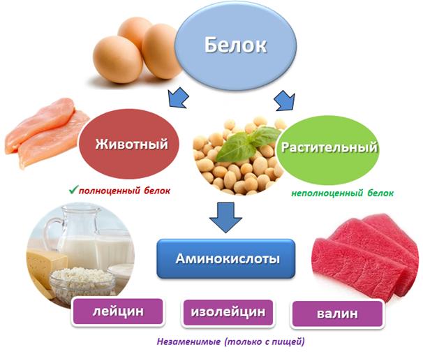 Растительный белок и животный белок в Молдове