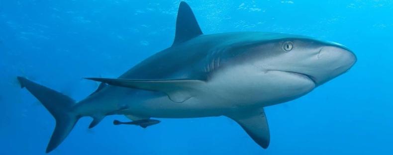 Акула - одно из наиболее физически совершенных живых существ на планете