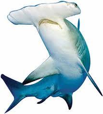 Акулий хрящ купить в Молдове NSP
