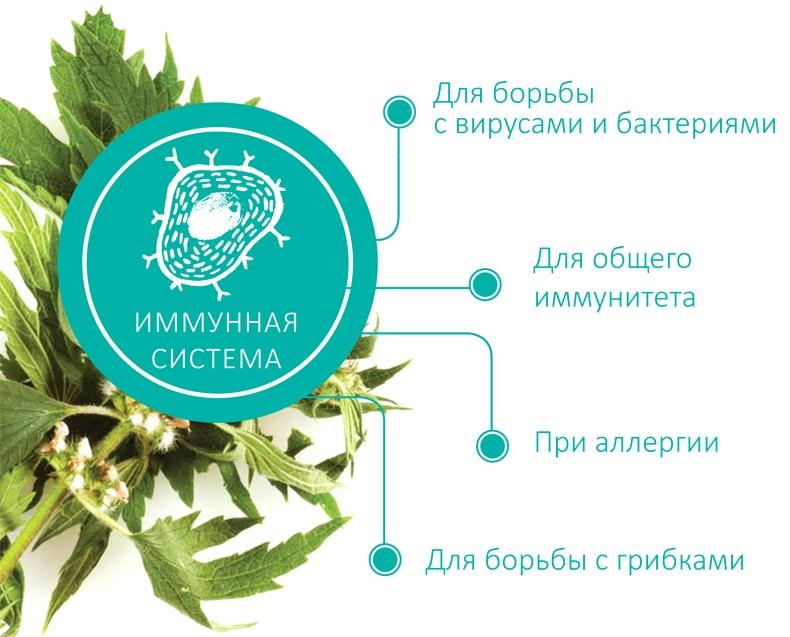 Функции иммунной системы