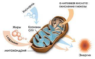 Коензим Q10 купить в Молдове NSP
