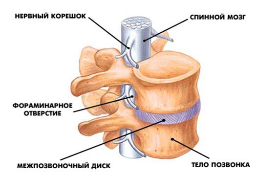 Кости остеопороз NSP