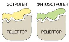 Фитопрогестероны в Молдове купить