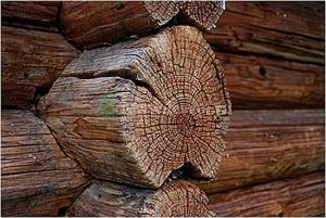 Целый ряд природных факторов приводит древесину к старению и распаду.