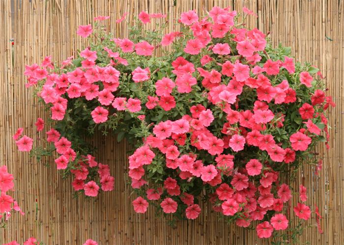 Весовые семена цветов оптом каталог семян Агрофирма Аэлита