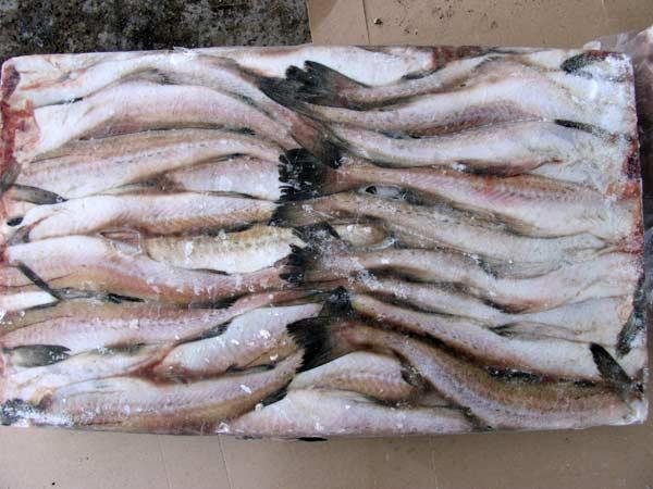 """Рыба """"Минтай"""" мороженая, потрошеная без головы, первого сорта, не менее 25 см,производства РФ, ГОСТ 1168-86. в Екатеринбурге и С"""