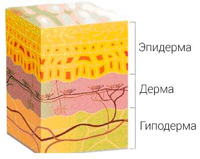 ortoped_5.jpg