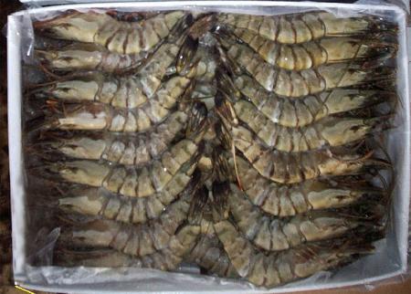 Изысканные напитки и еда ― Креветки тигровые с/г, размер 8-12 шт/кг Black tiger shrimps head on raw, size 8/12 pc/kg