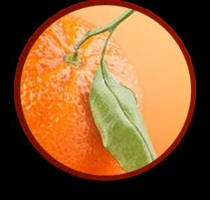 Экстракт апельстна