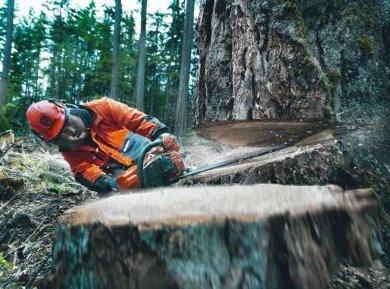 Профессиональная валка деревьев бензопилой