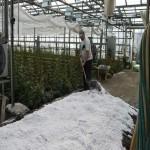 использование перлитового песка в сельском хозяйстве