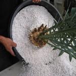 применение перлита для выращивания растений