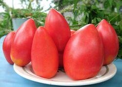 томат батяня описание сорта