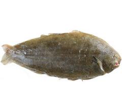 Морской язык – рыба семейства Солеевых