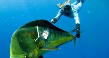 Охота под водой