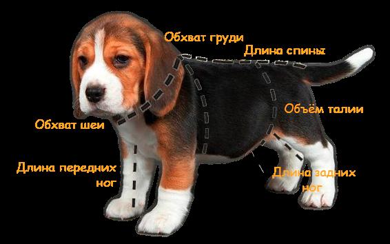 Как правильно подобрать одежду для собаки