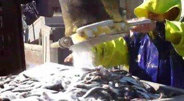 Применение лимонной кислоты при  обработке соленой рыбы