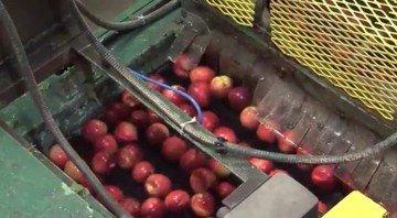 Применение вазелинового масла в пищевой промышленности