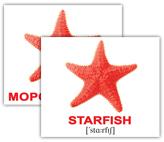 star_01_mini.jpg
