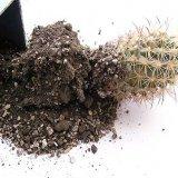 Состав почвы для кактусов
