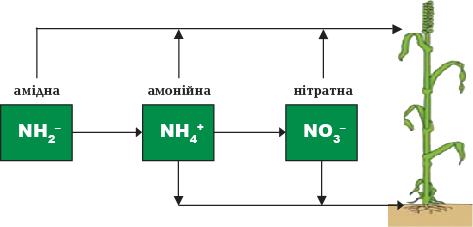 Поглинання рослинами форм азоту