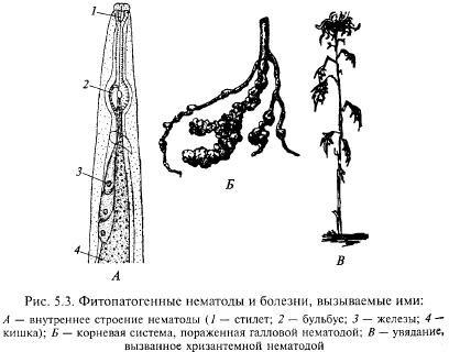 Фитопатогенные нематоды