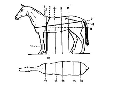 Промеры лошади