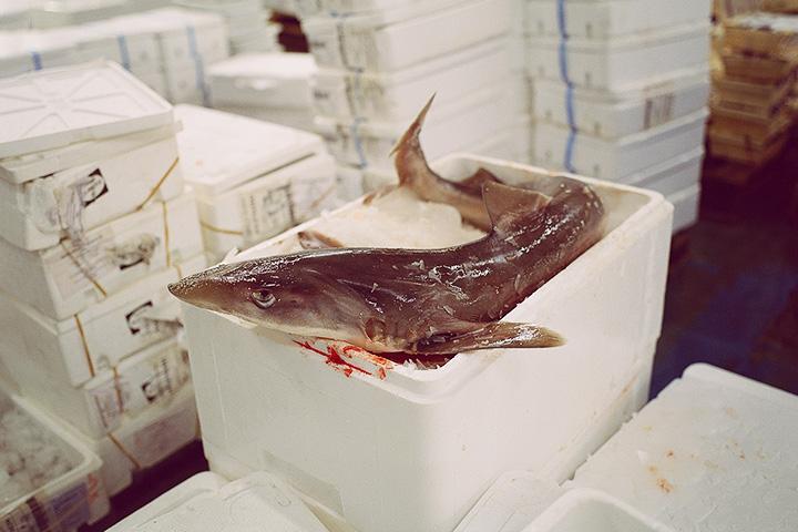 Это рыба в стадии трупного окоченения