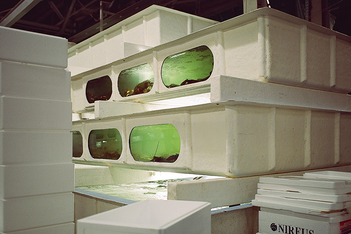 По всему складу стоят похожие на иллюминаторы аквариумы