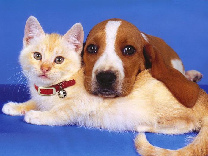DataLife Engine Версия для печати Кошки и собаки-лучшие друзья. (25 фото)