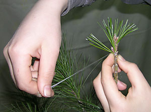 q?u=http%3A%2F%2Fkedr.forest.ru%2Fveget3-10.jpg&s=klbpajon&h=Am6sLOiocvigAx_3BXtZvA