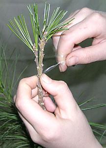 q?u=http%3A%2F%2Fkedr.forest.ru%2Fveget3-9.jpg&s=lneskvft&h=4Nvlh5rbQfZdxR8yBOPMUg