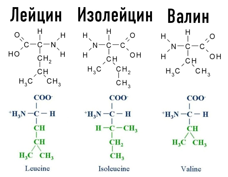 BCAA аминокислоты - лейцин, изолейцин, валин