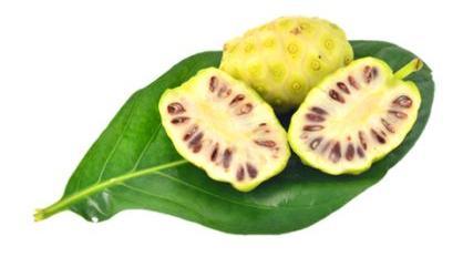 Плод Noni анальгетик для кровяного давления
