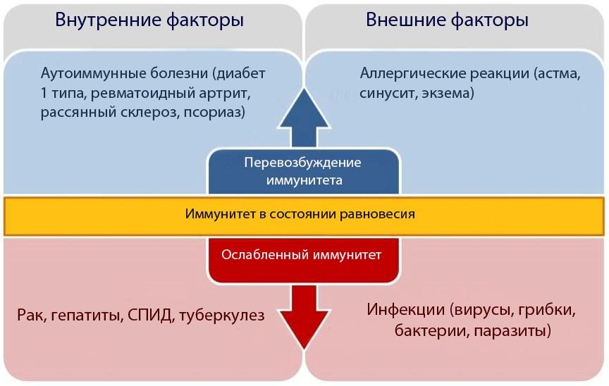 Функции иммунитета человека