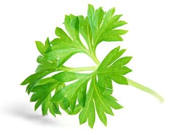 В комплекс Остеоплюс против остеопороза входит петрушка и другие растительные экстракты