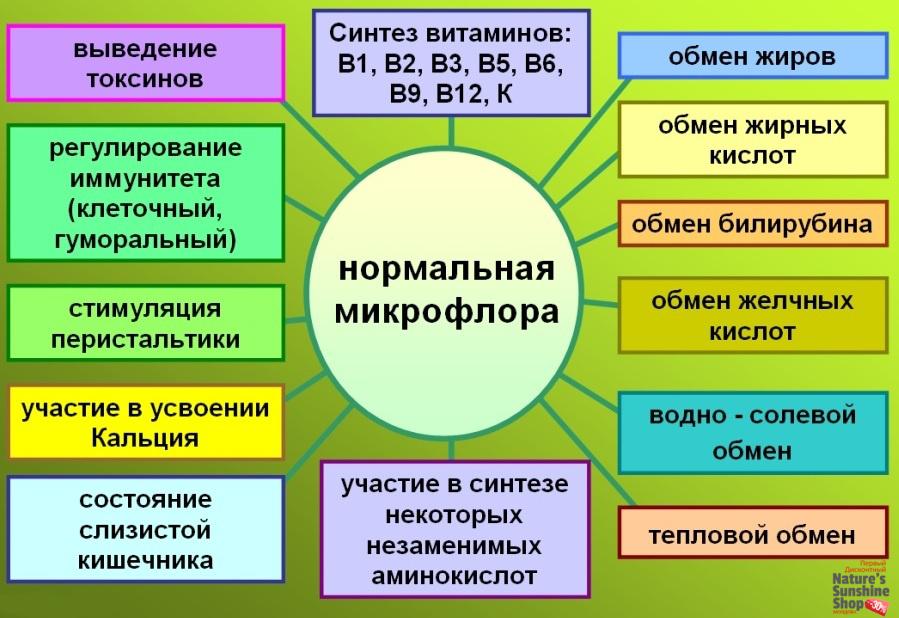 Функции нормальной микрофлоры кишечника