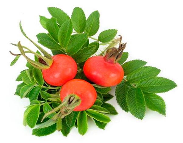 Плоды шиповника, кроме витамина С, содержат каротиноиды, витамины Р и Е, линолевую кислоту.