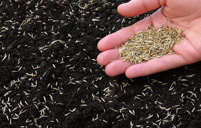 Посев газонной травы
