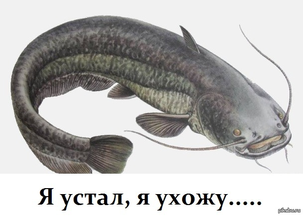 Рыба сом ATMHunt.ru Вестник охотника и рыбака Новости рыбалки Актуальные новости рыбалки со всего мира