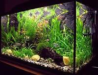 Таймери для акваріумів та террариумо